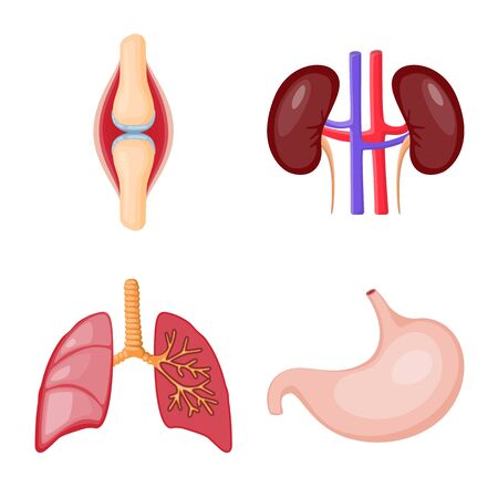 Isolated object of anatomy and organ icon. Set of anatomy and medical vector icon for stock.
