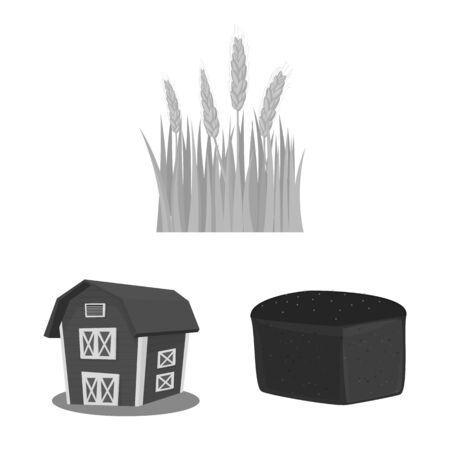 Isolated object of rye and plant symbol. Set of rye and corn stock symbol for web. Illustration