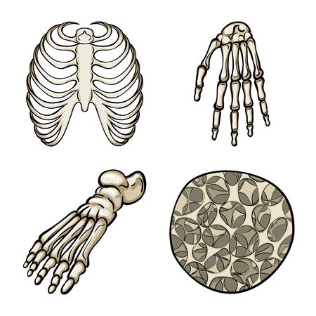 Isolated object of bone and skeleton symbol. Set of bone and human stock vector illustration.