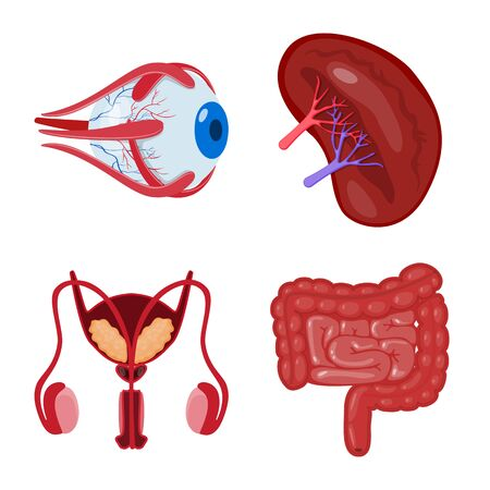 Vector design of anatomy and organ symbol. Set of anatomy and medical vector icon for stock. Vector Illustratie