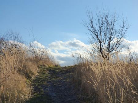 Pathway to heaven photo