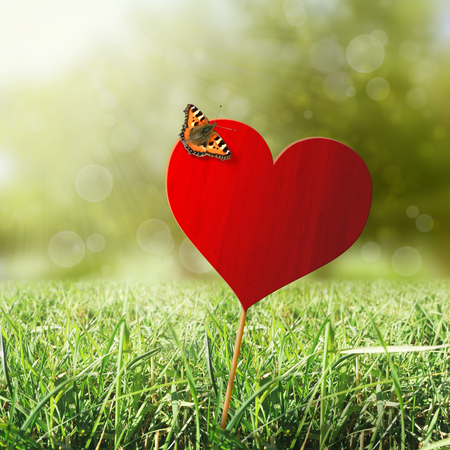Heart with butterfly, grass, sun and bokeh background photo