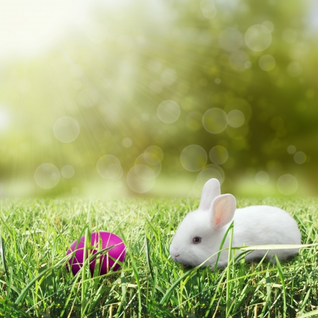 Easter egg with bunny and bokeh background photo