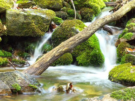 streamlet: Small creek in forest