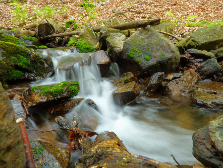 Small creek in forest photo