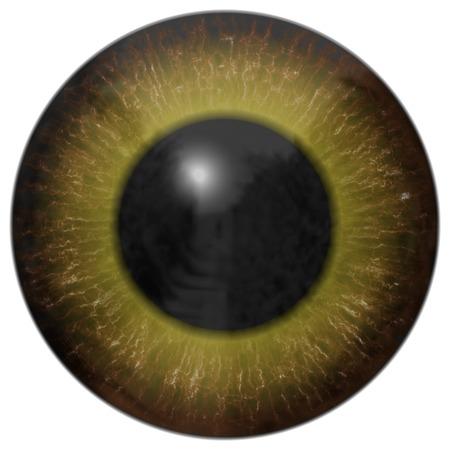 Eye iris generated hires texture photo