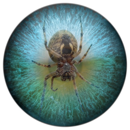 dilated pupils: Arachnophobia spider in your sight Stock Photo