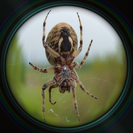 objective: Garden spider on web in objective lens