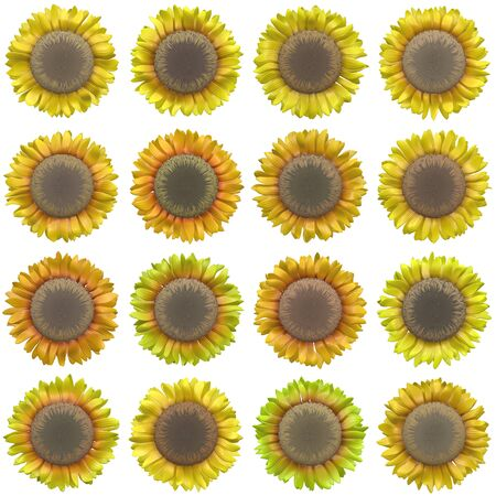 marguerite: Bloom set generated texture Stock Photo