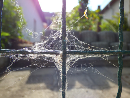 intricacy: Spider web on fence