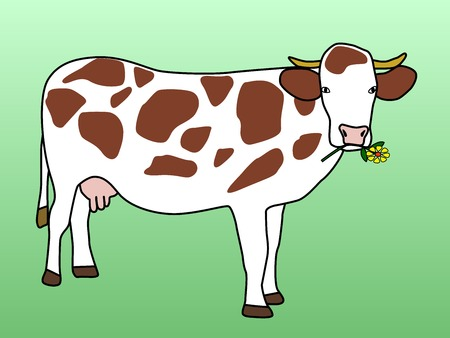 grazing: Cow grazing flower