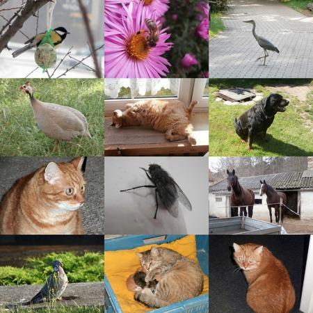 pigeon owl: Set of 12 animals photos