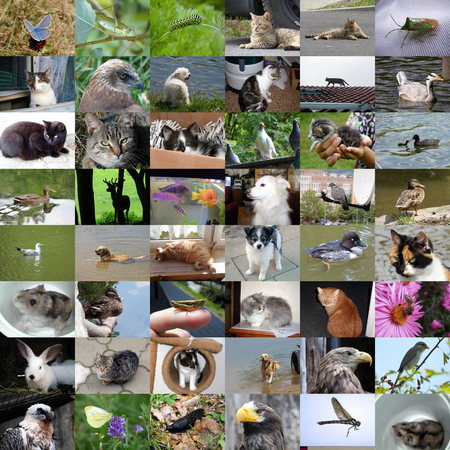 pigeon owl: Set of 48 animals photos