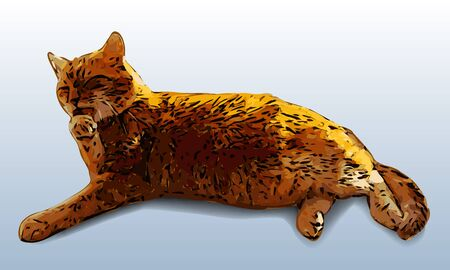 ginger cat: Washing relaxing ginger cat