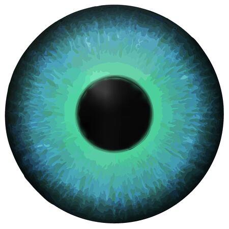 optometry: Eye iris vector texture