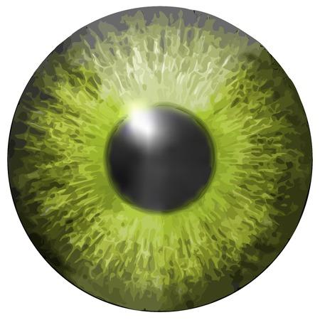 cornea: Eye iris vector texture