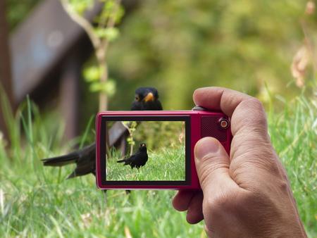 Blackbird in camera viewfinder