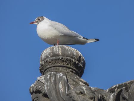 Seagull sitting on stone statue head Stock Photo
