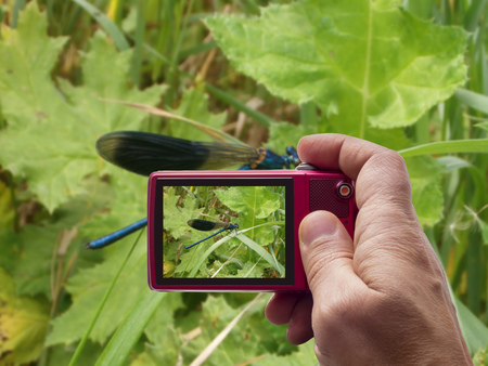 Blue dragonfly on leaf in camera viewfinder