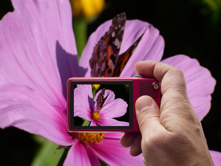 Butterfly on pink flower in camera viewfinder