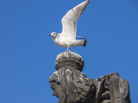 Seagull sitting on stone statue head Stock Photo