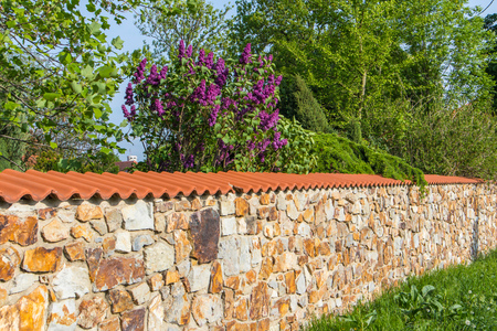 Stone wall with purple lilac bush