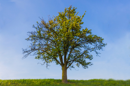 Tree on sunny day Stock Photo