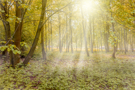 Sunny forest with sun rays