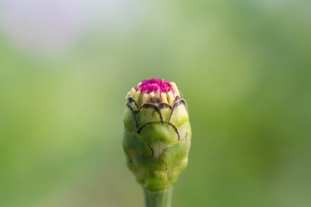 carpels: flower carpels