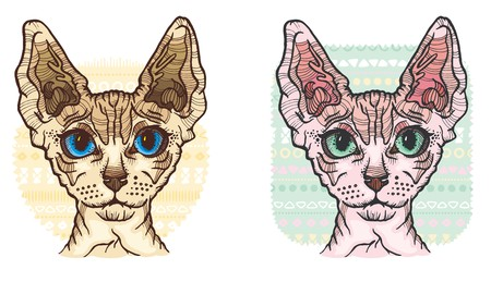 Sphynx Cat vector Illustration