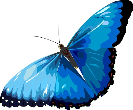 blue butterfly Stock Vector - 9657196