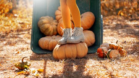 Cropped view of small girl in tights and boots standing on ripe orange pumpkin. Child spending autumn day on farm, walking near wheelbarrow with seasonal harvest