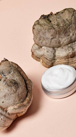 Tree mushroom and jar of cream isolated on pink background close-up beauty care