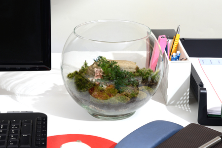 Make green in office with a little bottle of terrarium on working desk. Stock Photo