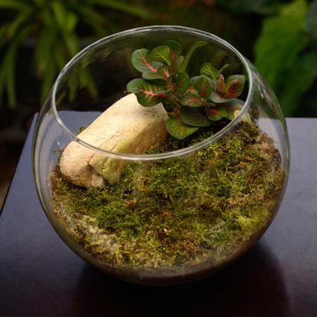 green garden: Terrarium, small garden in bottle, look so nice for home decoration.