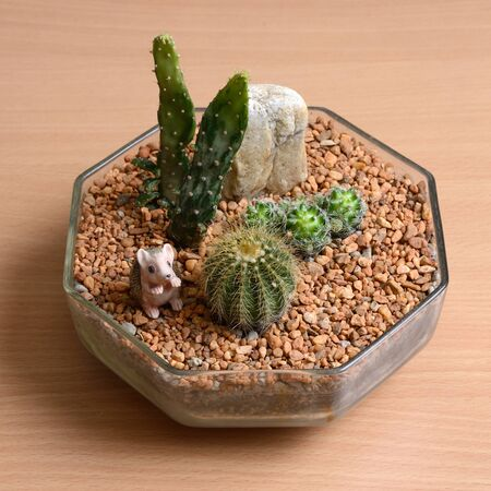 home decorated: Small garden decorated by some cactus for hobby and home decorated.