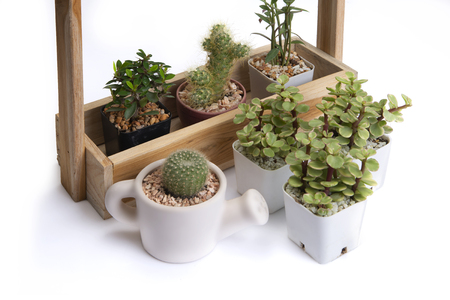 Various of small cactus in difference jardiniere on white background.