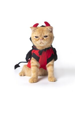 Little cat wearing devil suit for halloween on white background.