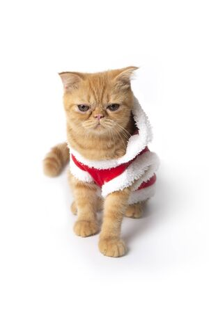 Little cat wearing red santa claus suit for christmas on white background.