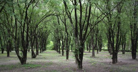 Forestry plantations increase green space to save the world from green house effect.