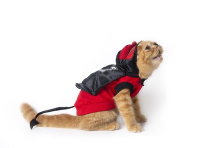 Little cat wearing red devil suit looking above to find something on white background. Banco de Imagens