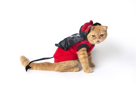 Side view photo of little cat wearing red devil suit on white background.