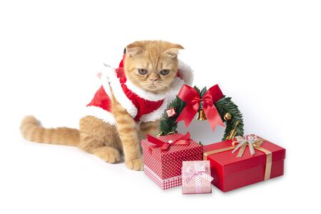 Little cat wearing red santa claus suit with gift boxes on white background.