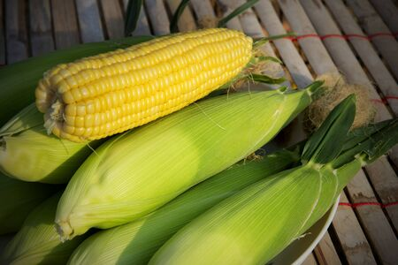 Sweet corn which is produced from organic agricultural farms in nature light.
