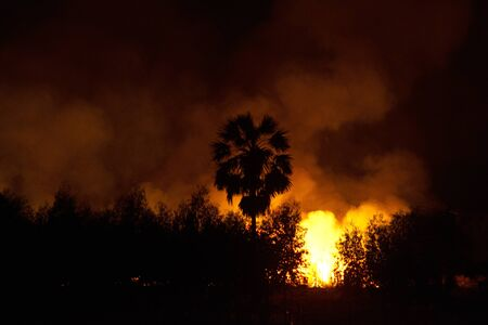 People burning sugarcane fields at night cause of pollution and environment impact. 스톡 콘텐츠