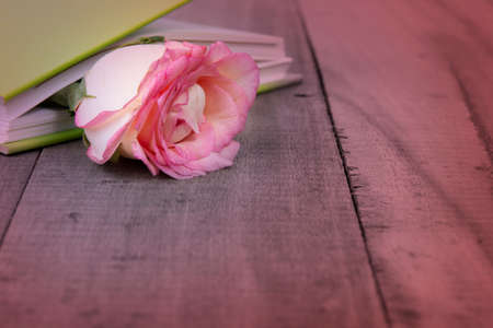 Close up of pink rose lay between the pages of notebook on wooden background.