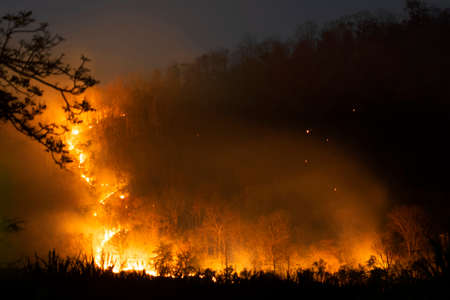 Orange flames of fire burning many trees in forest on mountain in the dark night.