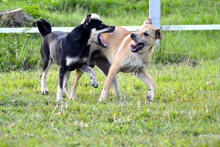 dog bite: Dog bite