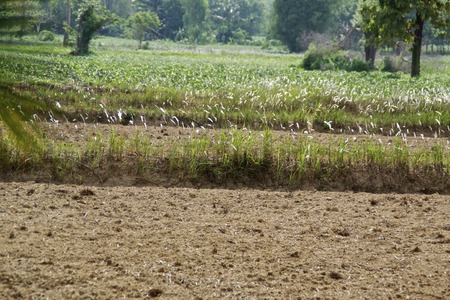 sequias: la sequía