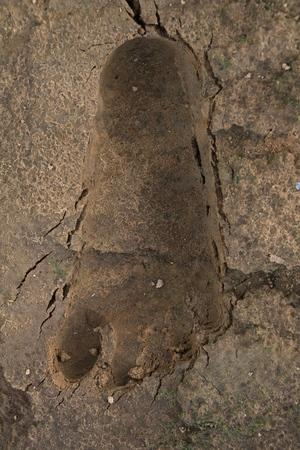 blenny: footprint Stock Photo